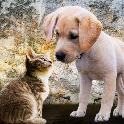 Ligner du dit kæledyr?